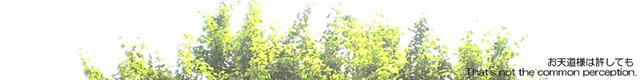 016 近所の木
